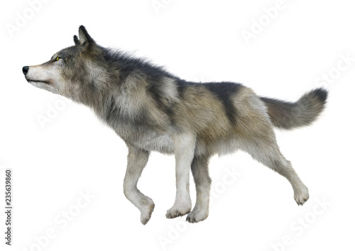 Fotografie, Obraz  3D Rendering Gray Wolf on White