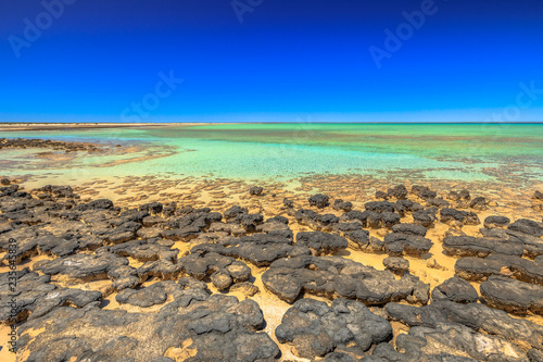 Poster Oceanië Stromatolites at Hamelin Pool, a protected Marine Nature Reserve in Shark Bay, Western Australia. Landscape of turquoise sea of Australian reef in sunny day with blue sky. Horizon wallpaper.