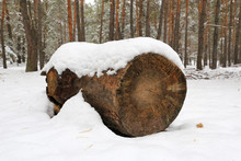 Wooden Log In Winter Forest