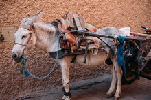 Working Loading Donkey In Morocco