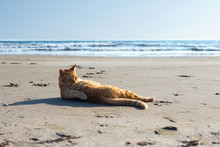 Cute Red Kitten On The Sand Of The Beach At Sunrise On The Sea Wave Background.