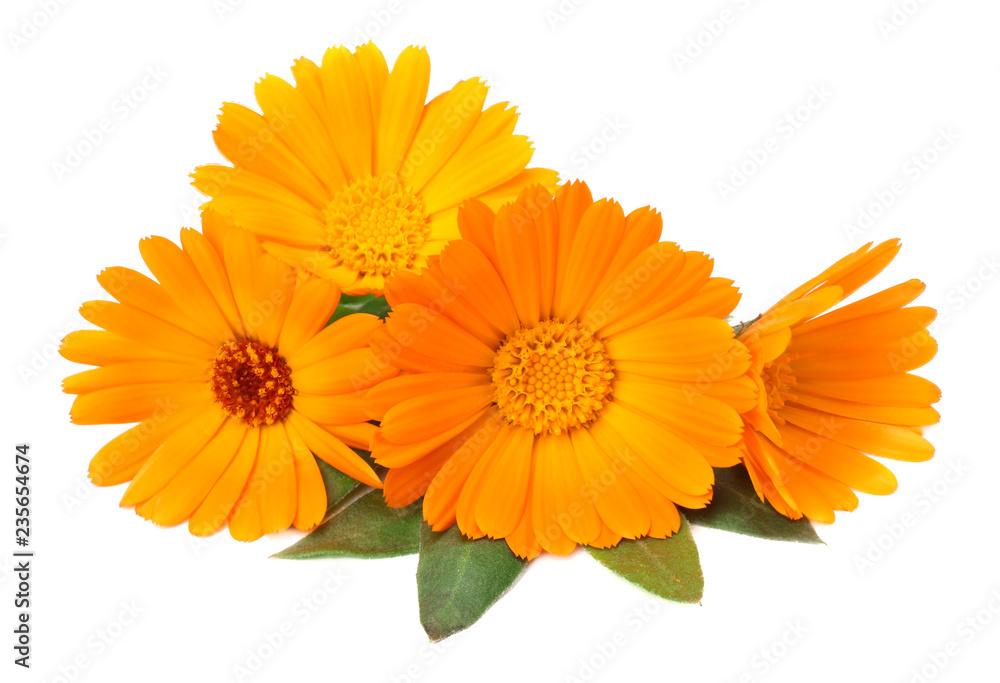 Fototapety, obrazy: marigold flowers with green leaf isolated on white background. calendula flower.