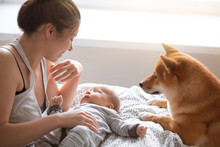 Mother, Newborn Baby Boy And Friendly Shiba Inu Dog In Home Bedroom.