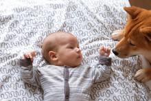 Newborn Baby Boy And Friendly Shiba Inu Dog In Home Bedroom.