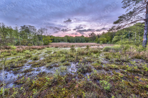 Valokuva  Moor fen on Ontwijk estate