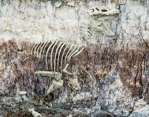 Fototapeta na wymiar dinosaur skeleton. 3d