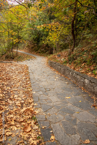 Foto auf Leinwand Garten Stone-paved footpaths strewn with dry fall foliage in the woods. Greece