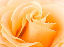 Rose Swirls Full Frame Close Up
