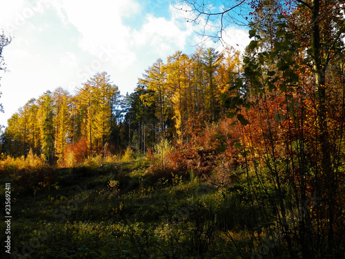 Photo Stands Road in forest Beautiful Polish golden autumn.