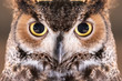 Close-up on Great Horned Owl Face and Eye