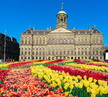 Koninklijk Paleis At Dam Square In Amsterdam, Netherlands With Tulips
