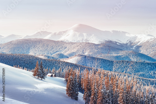 Fototapeta Fantastic winter landscape with snowy trees. Carpathian mountains, Ukraine, Europe. Christmas holiday concept obraz