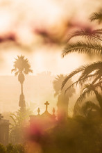Palm Trees At Christian Cemete...
