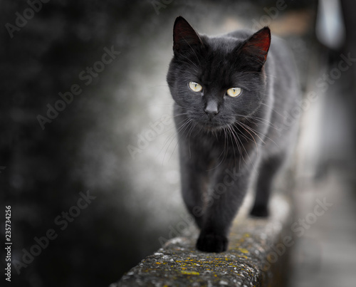 Fotografía Black cat