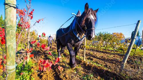 cheval de trait et labour Canvas-taulu
