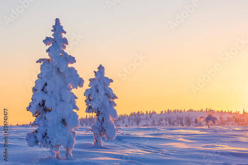 Printed kitchen splashbacks Beige Beautiful winter landscape with snow-covered trees in Lapland