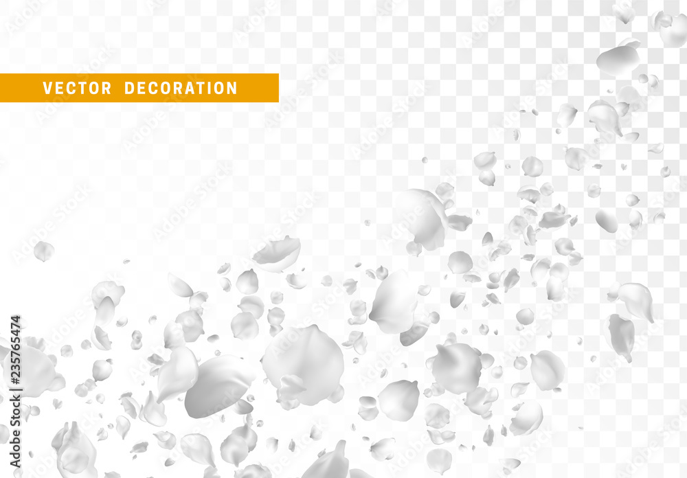 Fototapeta White flower petals are flying circling isolated on transparent background