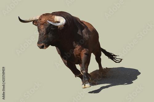 toro en españa
