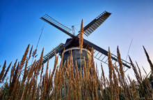 Dutch Windmill Behind The Cornfield, In Benz On The Island Of Usedom. Germany
