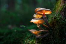 Leuchtende Pilze Im Wald