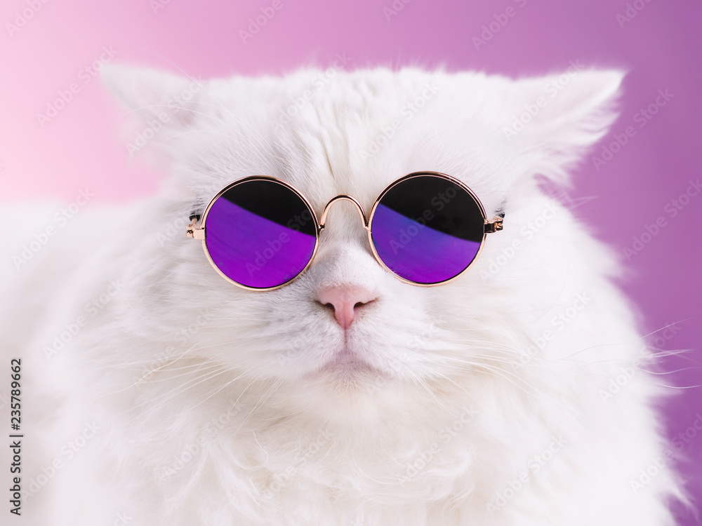 Fototapety, obrazy: Close portrait of white furry cat in fashion sunglasses. Studio photo. Luxurious domestic kitty in glasses poses on pink background wall