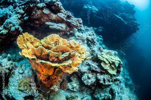 Morze czerwone Dahab