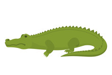 Crocodile Or Alligator Green Animal. Wild Reptile