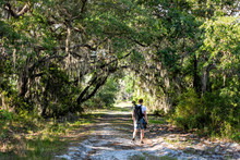 Man Travel Photographer Trekking, Walking On Landscape With Oak Trees And Trail Path In Myakka River State Park Wilderness Preserve In Sarasota, Florida With Tripod