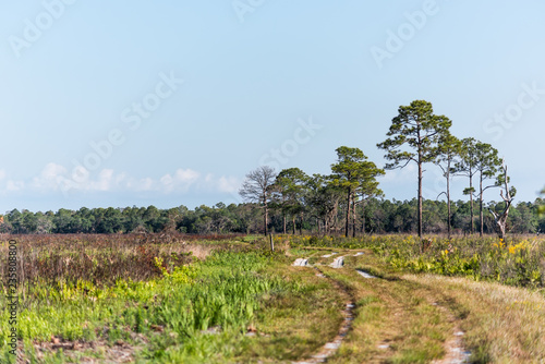 Fotografie, Obraz  Prairie landscape with trees and trail path in Myakka River State Park Wildernes