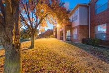Beautiful View From Backyard Of Apartment Complex Building At Evening Time During Fall Season. Pile Of Dried Leaves On Grass Lawn And Bright Yellow Fall Foliage