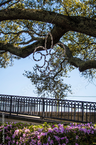 A Fleur de Lis Decoration Covered in Lights Hung in a Tree with Azalea Bushes Gr Canvas Print