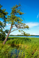 Obraz na Szkle Rzeki i Jeziora Panoramic view of Wulpinskie Lake at the Masuria Lakeland region in Poland in summer season