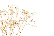 Dry Grass Flower On White Background