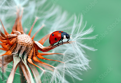 Beautiful Ladybug sitting on flower in a summer garden