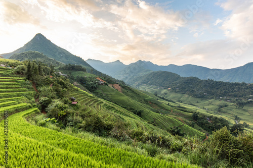 Poster Blanc Beautiful Natural Rice fields terrace in SAPA northwest of Vietnam in summer