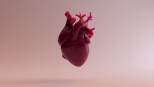 Pink Anatomical Heart 3d Illus...