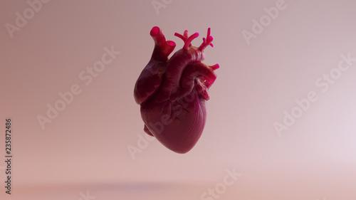 Obraz na plátně Pink Anatomical Heart 3d illustration 3d render
