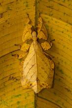 Overhead View Of Mantis On Leaf