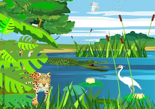 Wetlands, on the lake, vector landscape, jaguar, american pantanal