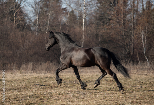 Photo  mare and foal