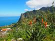 Blühende Strelizien im Norden Madeiras
