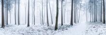 Wald Panorama Im Winter