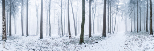Photo Stands Road in forest Wald Panorama im Winter