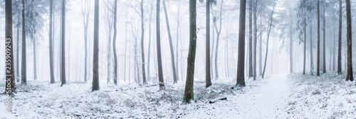 Fototapeten Wald Wald Panorama im Winter