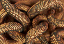 Bronze Colored Snakes Abstract...