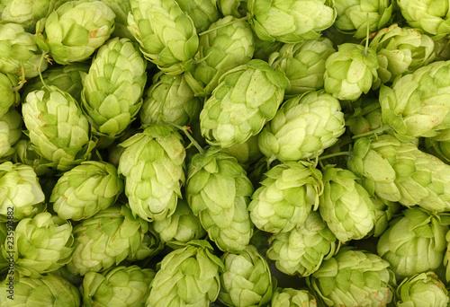 Cuadros en Lienzo Close up background of fresh green beer hops
