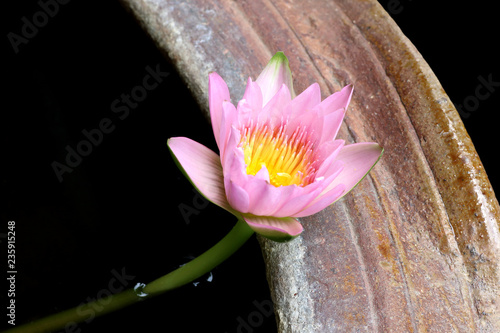 Foto op Canvas Lotusbloem Pink lotus and lotus flower plant in pot