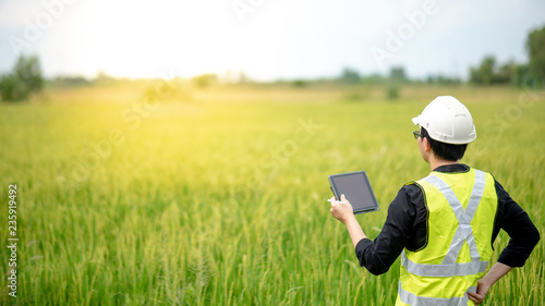 Foto auf Leinwand Gelb Schwefelsäure Young Asian male agronomist or agricultural engineer observing green rice field with digital tablet and pen for the agronomy research. Agriculture and technology concepts