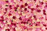 Wiele różnych różowe, czerwone i białe kwiaty abstrakcyjny wzór tła - 235920409