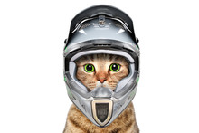 Portrait Of A Cat In A Bicycle Helmet Isolated On White Background